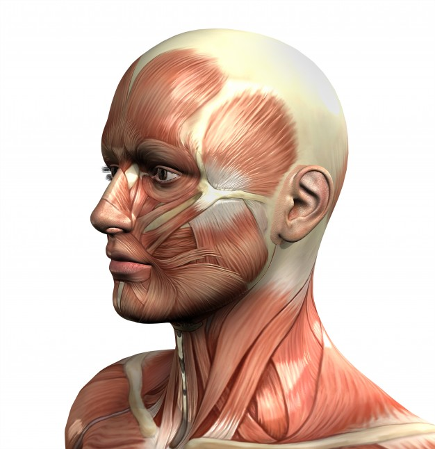 Muscles in the neck and how to relieve them